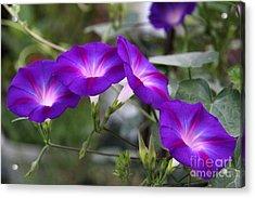 4 Purples Acrylic Print by Yumi Johnson