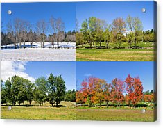 4 Season Trees Acrylic Print
