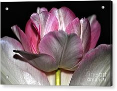 Acrylic Print featuring the photograph Tulipe by Sylvie Leandre