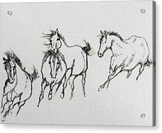 4 Wild Horses  Acrylic Print