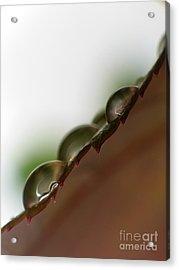 Drops Acrylic Print by Odon Czintos