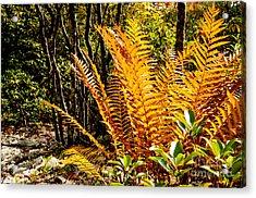 Fall Color Fern Acrylic Print by Thomas R Fletcher