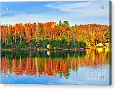 Fall Forest Reflections Acrylic Print by Elena Elisseeva
