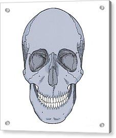 Illustration Of Anterior Skull Acrylic Print