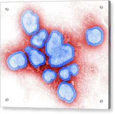 Influenza A Virus Acrylic Print by Science Source