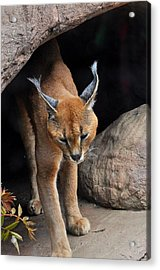 Mix Selection Of Animals  Acrylic Print by Puzzles Shum