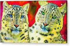 Nixo Acrylic Print
