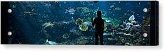 Sea-life Centre, France Acrylic Print by Alexis Rosenfeld