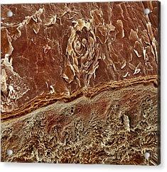 Sweat Pore, Sem Acrylic Print by Steve Gschmeissner