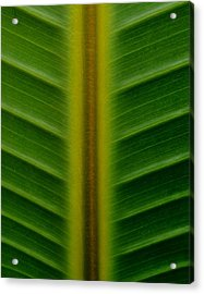 Wild Banana Leaf Acrylic Print