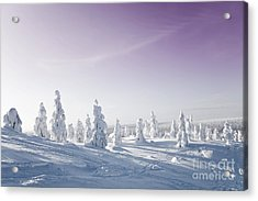 Winter Acrylic Print by Kati Molin