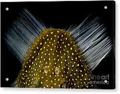 Amazon River Catfish Acrylic Print by Dante Fenolio