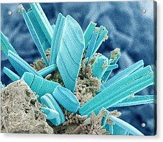 Diatoms, Sem Acrylic Print by Susumu Nishinaga