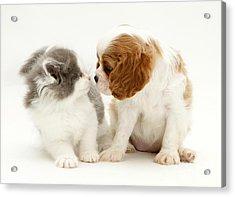 Dog And Cat Acrylic Print by Jane Burton