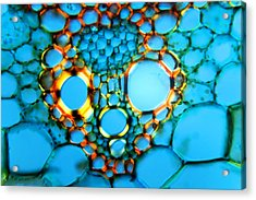Maize Stem, Light Micrograph Acrylic Print by Dr Keith Wheeler