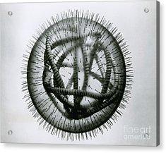 Measles Virus Acrylic Print