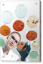 Microbiology Research Acrylic Print by Tek Image