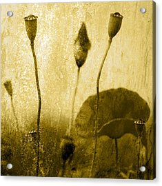 Poppy Art Image Acrylic Print by Falko Follert