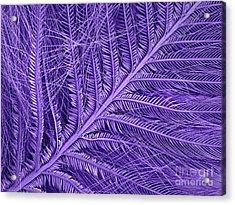 Sem Of Eastern Bluebird Feathers Acrylic Print by Ted Kinsman