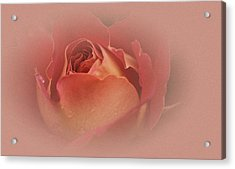 Vintage Rose Acrylic Print by Richard Cummings