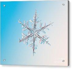 Snowflake Acrylic Print by Ted Kinsman
