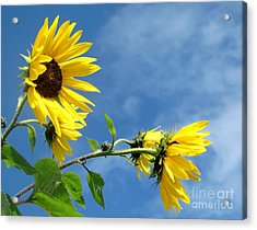 Acrylic Print featuring the photograph Sunflowers by France Laliberte