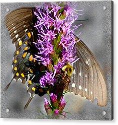 Butterfly Design Collection Acrylic Print by Debra     Vatalaro