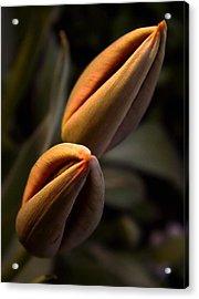 Tulips Acrylic Print by Odon Czintos