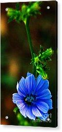 Flower Acrylic Print by Lenroy Johnson