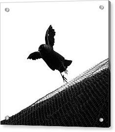 Acrylic Print featuring the photograph No Title  by Mariusz Zawadzki