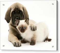 Puppy And Kitten Acrylic Print by Jane Burton