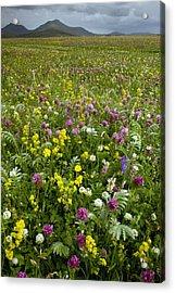 Wildflower Meadow Acrylic Print by Bob Gibbons