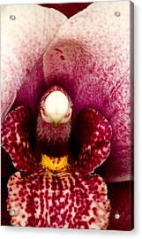 Exotic Orchids Of C Ribet Acrylic Print by C Ribet