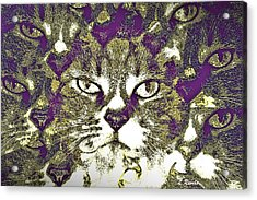 9 Lives Acrylic Print by Leslie Revels Andrews
