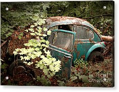 A '65 Bug In The Overgrowth Acrylic Print by Michael David Sorensen