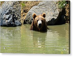 A Bear's Hot Tub Acrylic Print by Methune Hively
