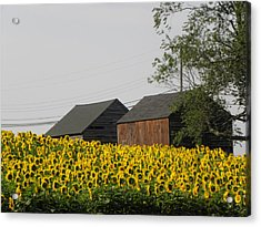A Beautiful Country Setting In Ct Acrylic Print by Kim Galluzzo Wozniak