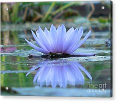 A Beautiful Water Lily Reflection Acrylic Print