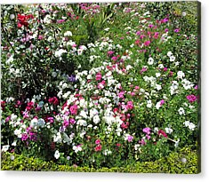 A Bed Of Beautiful Different Color Flowers Acrylic Print by Ashish Agarwal