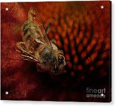 a Bee Acrylic Print by Billie-Jo Miller