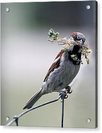 Acrylic Print featuring the photograph A Bird And A Twig by Elizabeth Winter