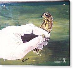 A Bird In Hand Acrylic Print
