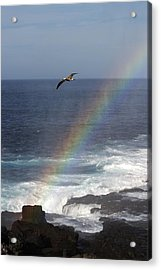 A Blue Footed Booby Soars Acrylic Print by Ralph Lee Hopkins