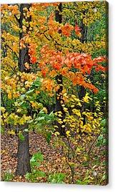 A Blustery Autumn Day Acrylic Print