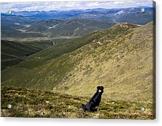 A Border Collie's Playland Acrylic Print by Kelly Turnage