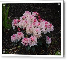 Acrylic Print featuring the photograph A Bouquet Of Pink And White by Frank Wickham