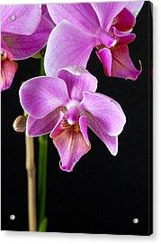 A Brilliant Orchid Acrylic Print by Charlie Osborn