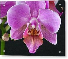 A Brilliant Orchid II Acrylic Print by Charlie Osborn