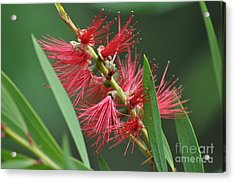 A Brush With Beauty Acrylic Print by Joanne Kocwin