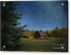 A Brush With Fall Acrylic Print by The Stone Age
